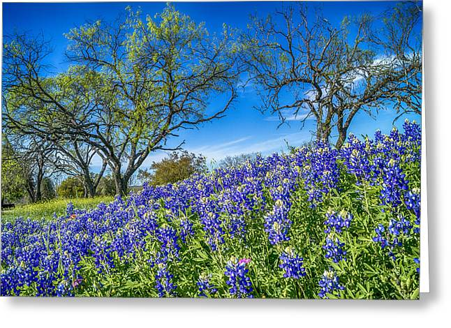 Lbj Bluebonnets Greeting Card