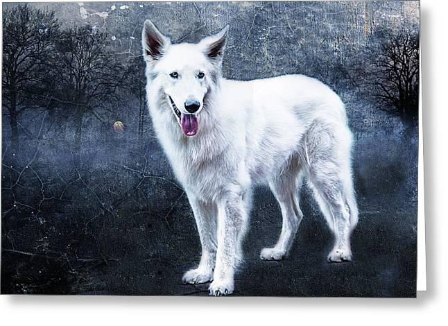 Le Loup Blanc Greeting Card by Joachim G Pinkawa