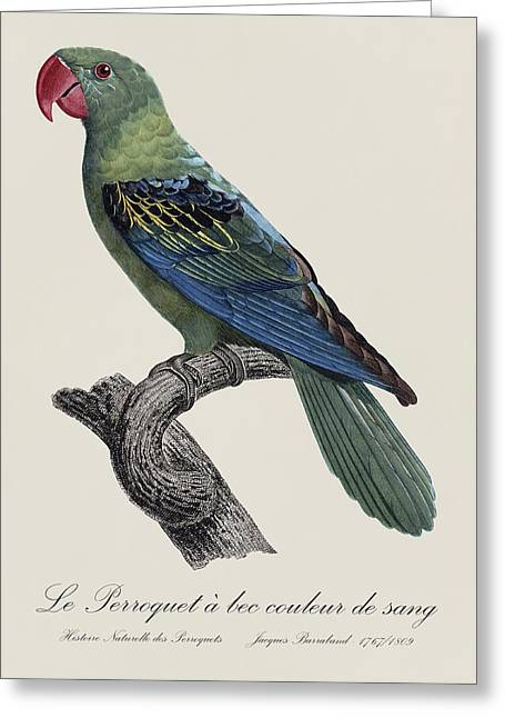 Le Perroquet A Bec Couleur De Sang / Great-billed Parrot - Restored 19thc. Illustration By Barraband Greeting Card