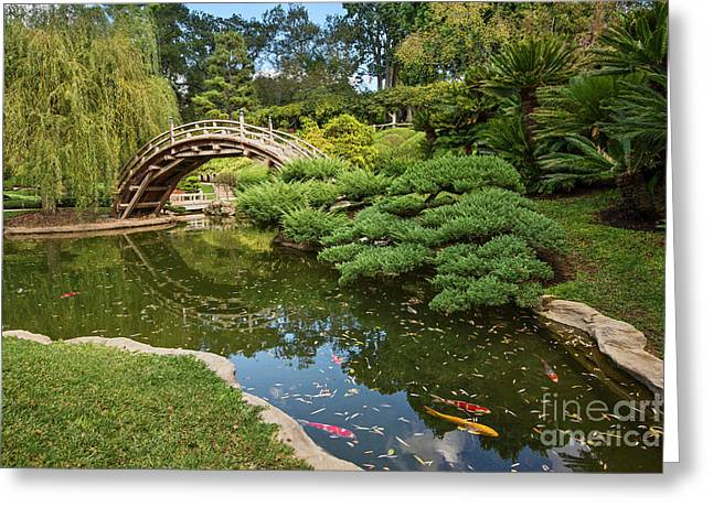 Lead The Way - The Beautiful Japanese Gardens At The Huntington Library With Koi Swimming. Greeting Card