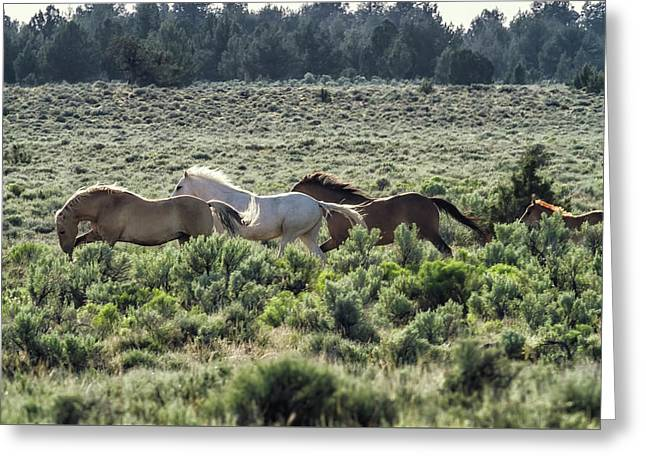 Leader Of The Pack Greeting Card by Belinda Greb