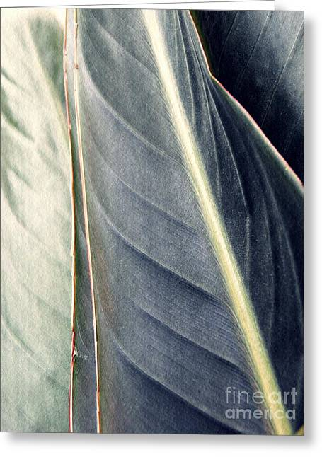 Leaf Abstract 14 Greeting Card