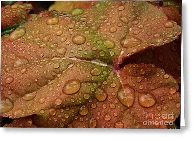 Leaf Abstract 17  Greeting Card by Sarah Loft
