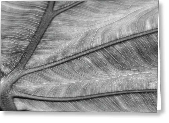 Leaf Abstraction Greeting Card