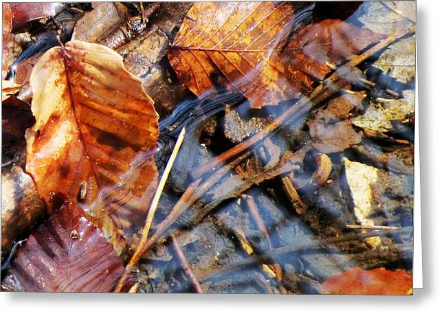 Ohio ist Digital Greeting Cards - Leaf Beds in the Water Greeting Card by Mindy Newman
