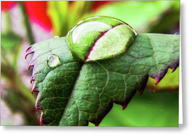 Leaf Greeting Card by Cesar Vieira