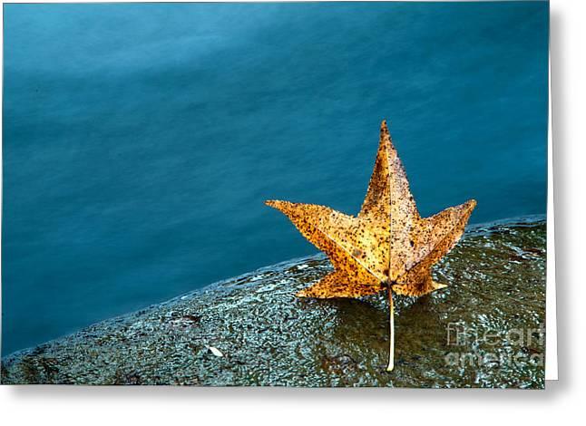 Leaf Greeting Card by Chris Mason