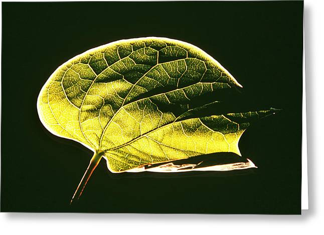 Leaf Detail Greeting Card by Gerard Fritz