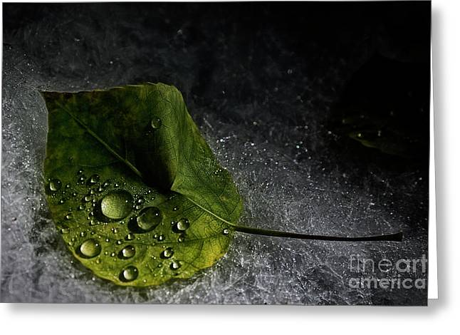 Greeting Card featuring the photograph Leaf Droplets by Brad Allen Fine Art