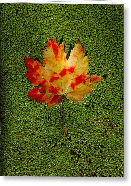 Leaf Floating On Duckweed Greeting Card