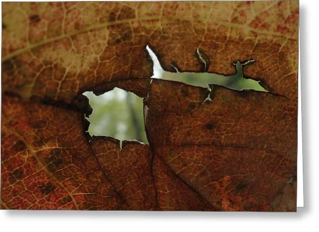 Leaf Frame Greeting Card by Trish Hale