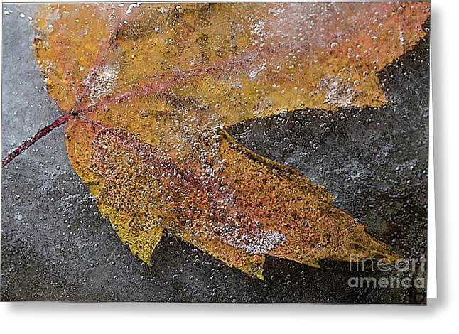 Leaf In Ice 3 Greeting Card by Jim Wright