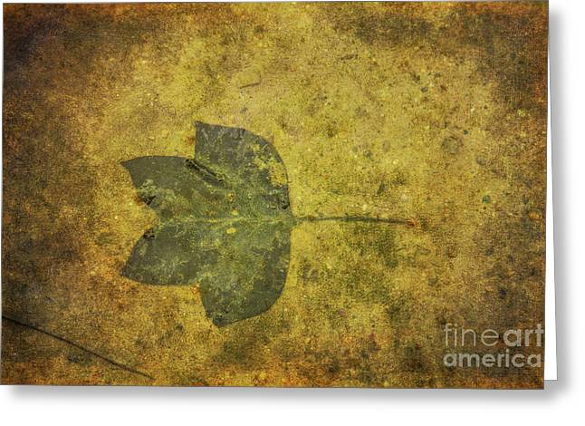Greeting Card featuring the digital art Leaf In Mud One by Randy Steele