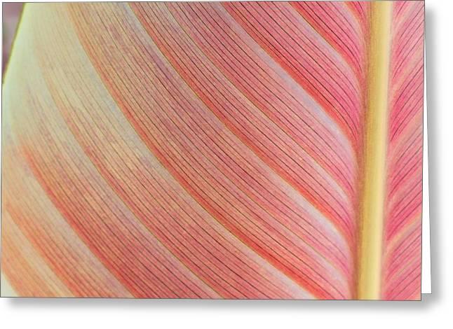 Leaf In Pink  Greeting Card