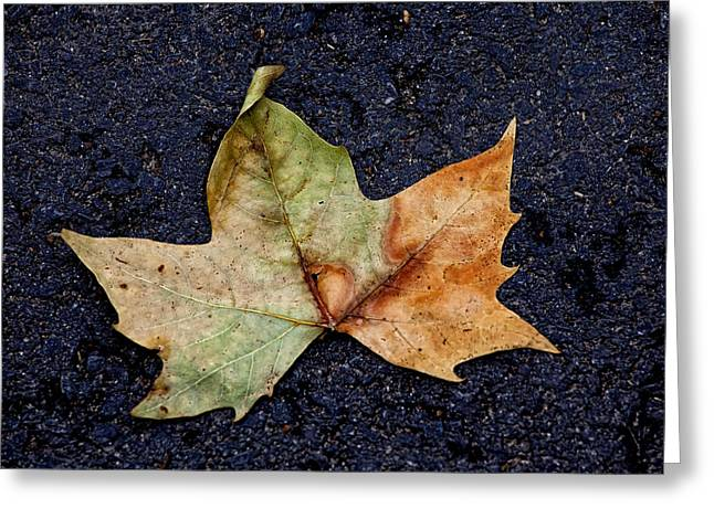 Leaf In The Road Greeting Card by Robert Ullmann