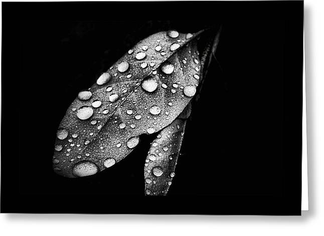 Leaf It Greeting Card by Karen Scovill