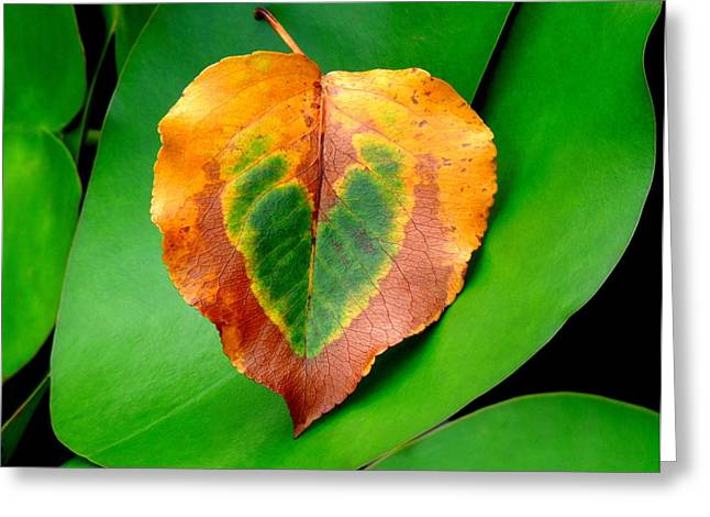 Leaf Leaf Heart Greeting Card