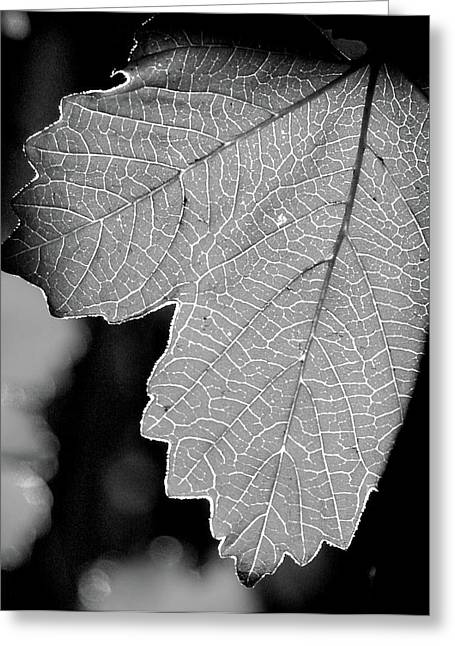 Leaf Light Black And White Greeting Card by James Granberry