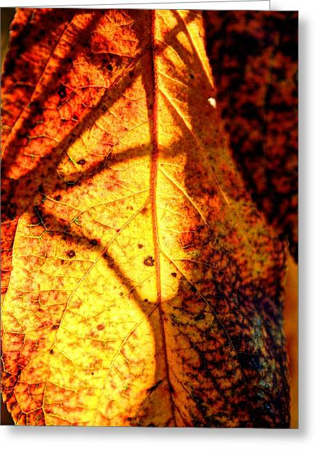 Leaf Light Greeting Card