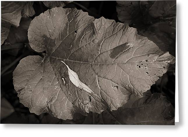 Leaf On A Leaf Greeting Card