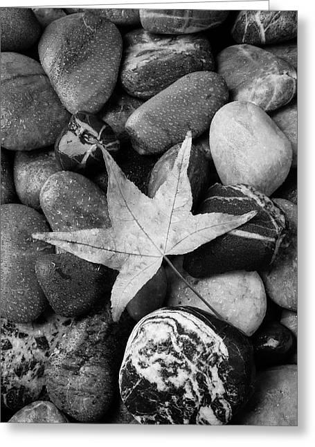 Leaf On River Rocks Greeting Card by Garry Gay