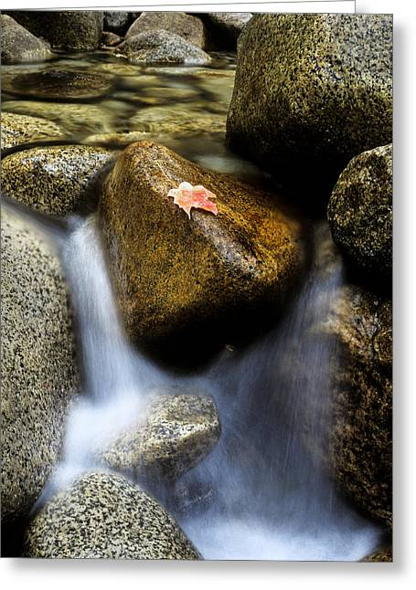 Lanscape Greeting Cards - Leaf on Rock-Yosemite Valley Greeting Card by Joe  Palermo
