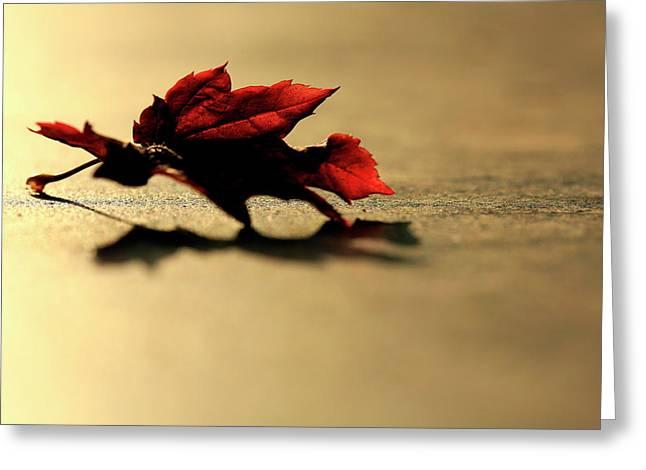 Leaf On The Garage Floor Greeting Card