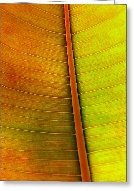 Leaf Pattern Greeting Card