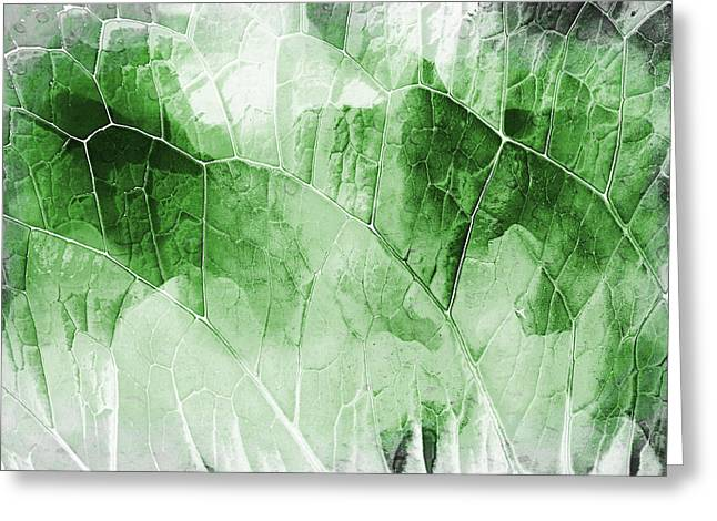 Leaf Pattern  Greeting Card by Tom Gowanlock