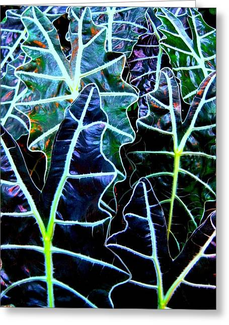 Leaf Patterns Greeting Card by Shirley Sirois