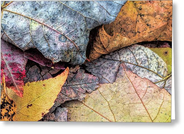 Leaf Pile Up Greeting Card