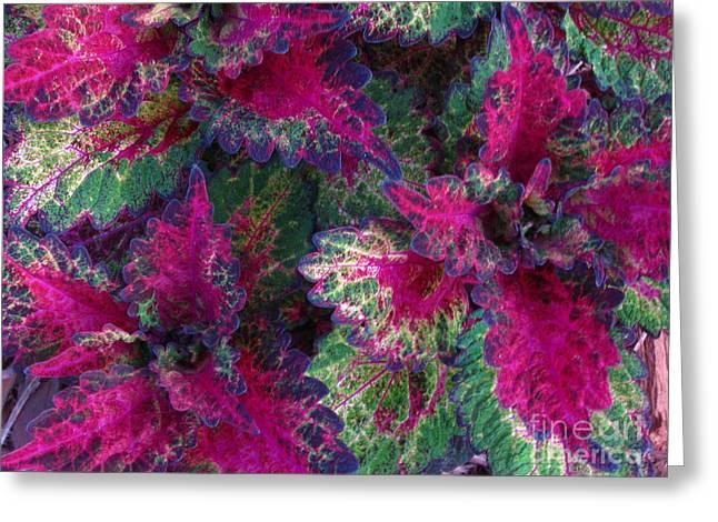 Leaf Power Greeting Card by Greg Patzer