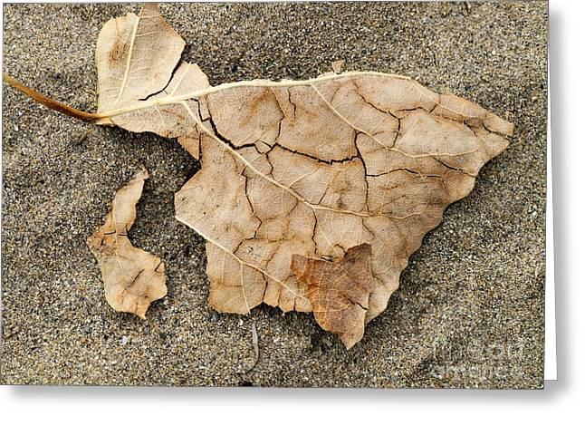 Leaf Scorch Greeting Card