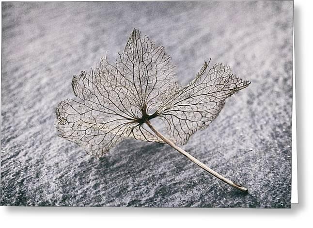 Leaf Skeleton Greeting Card