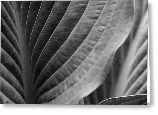 Leaf - So Many Ways Greeting Card by Ben and Raisa Gertsberg