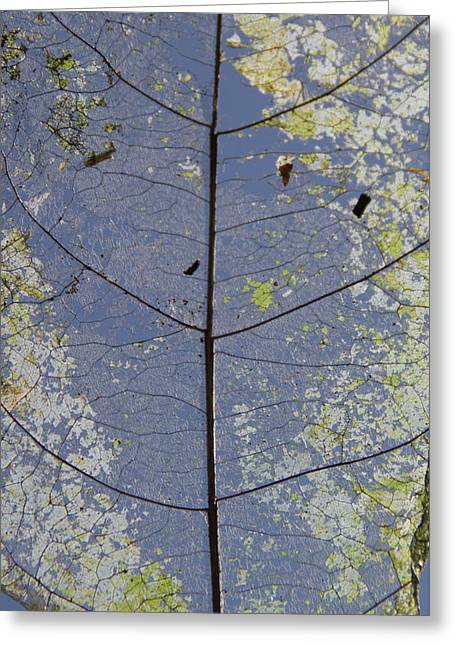 Greeting Card featuring the photograph Leaf Structure by Debbie Cundy