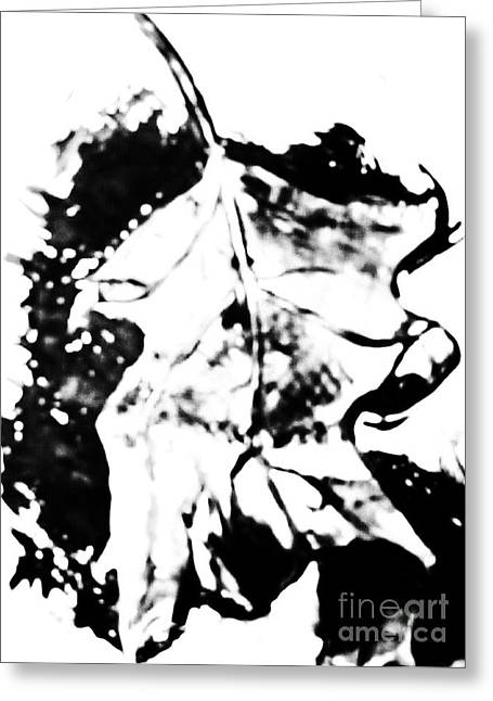 Leaf Study Black And White Greeting Card by Jamey Balester