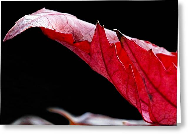 Leaf Study IIi Greeting Card
