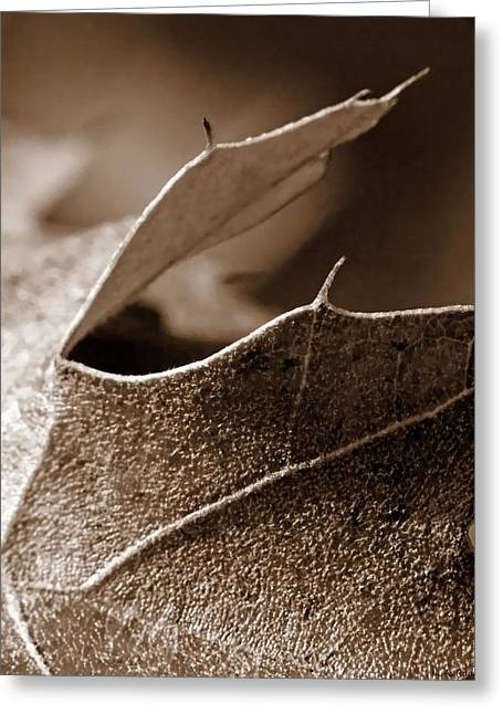 Leaf Study In Sepia II Greeting Card