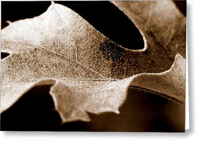 Leaf Study In Sepia Greeting Card by Lauren Radke