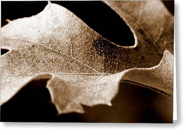 Leaf Study In Sepia Greeting Card