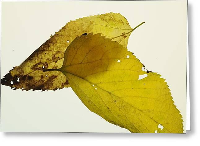 Leaf Symmetry Greeting Card by Jon Benson