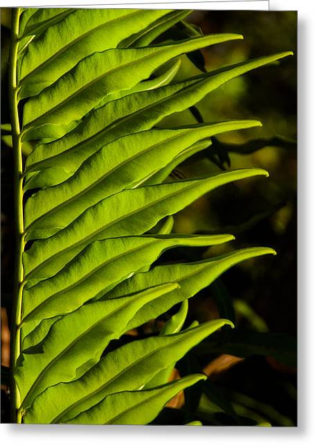 Leaf To The Right Greeting Card by Christopher Holmes