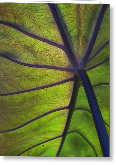 Leaf Veins Greeting Card by Gene Ritchhart