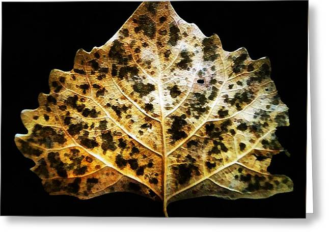 Leaf With Green Spots Greeting Card by Joseph Frank Baraba