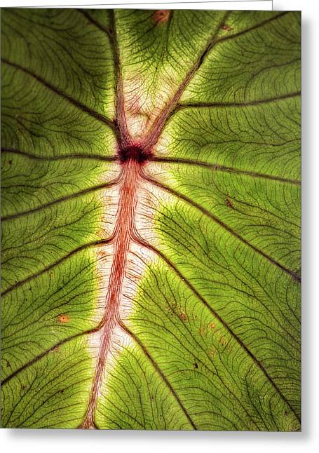 Leaf With Veins Greeting Card