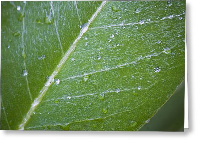 Leaf With Water Droplets Greeting Card