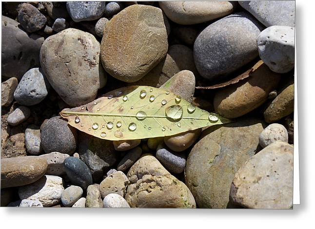 Leaf With Water Droplets In Rocks Greeting Card