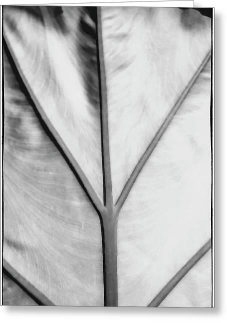 Leaf1 Greeting Card
