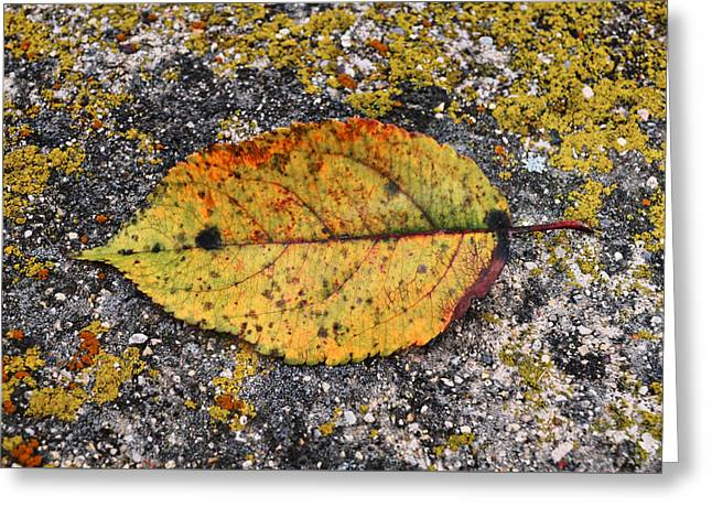Leafage...lichens Greeting Card by Tom Druin